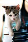 Musical Kitten by Extraordinary Light