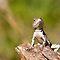 Lizards, Geckos, and Such