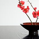 Bowl With Japonica by prbimages