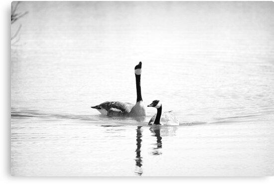 Just Geese by KatsEyePhoto