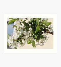White Sea of Blossoms Art Print