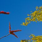 Ocotillo and Palo Verde Blooms Waving in the Wind by Bo Insogna