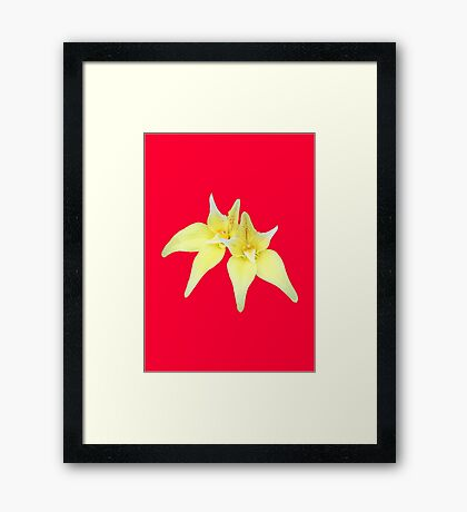 Cowslip Orchid Framed Print