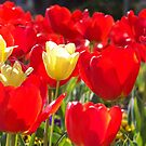 Red and Yellow Flowers by Jimmy Durham