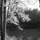 Black and White Pond by Jimmy Durham