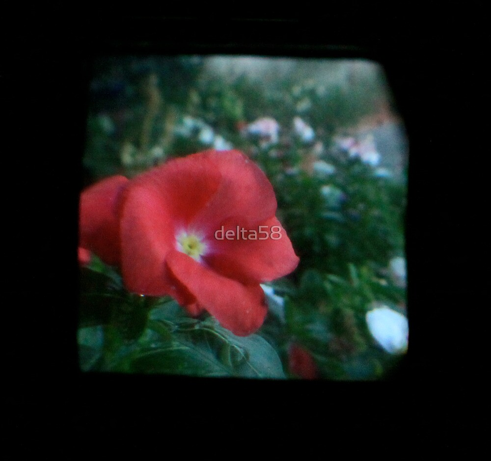 TTV Image ( Through The Viewfinder)#10 by delta58