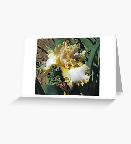 Whipped Honey Iris Greeting Card