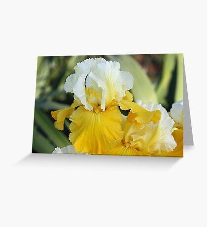 Montana de Oro Iris Greeting Card
