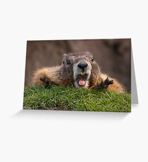 Marmot Surprise Greeting Card