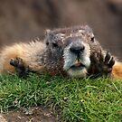 Psst, over here! by Rodney55