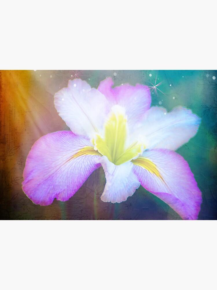 Iris by KeithHawley