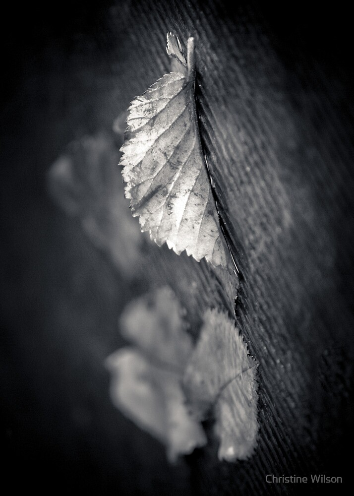 Flutter by Christine Wilson
