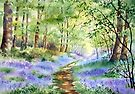 Bluebells in Bunny Wood by Ann Mortimer