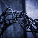 Tangled Up In Blue by Christine Annas