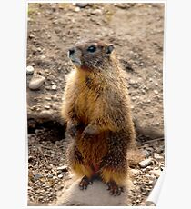 Marmot Standup Poster