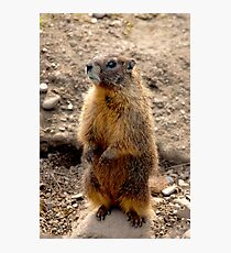 Marmot Standup Photographic Print