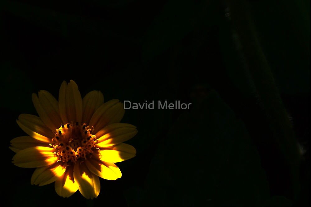 In The Undergrowth by David Mellor