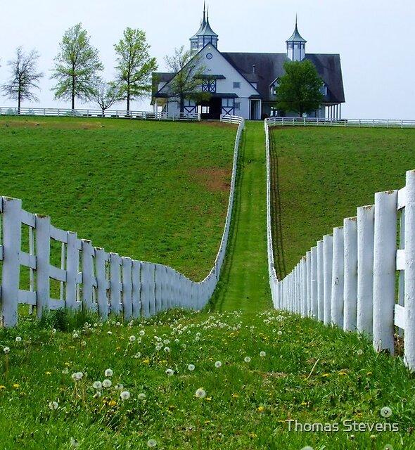 Perfect Fences by Thomas Stevens