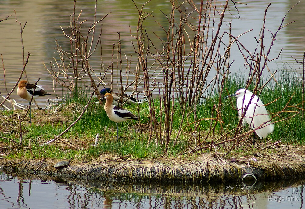 Lots of activity on this small pond island by Klaus Girk
