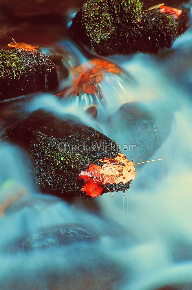 AUTUMN LEAVES AND MOSSY ROCKS by Chuck Wickham