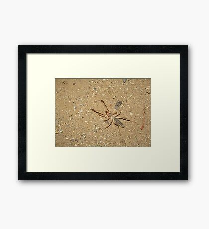 Sunspider (Windscorpion, Camel Spider) Framed Print