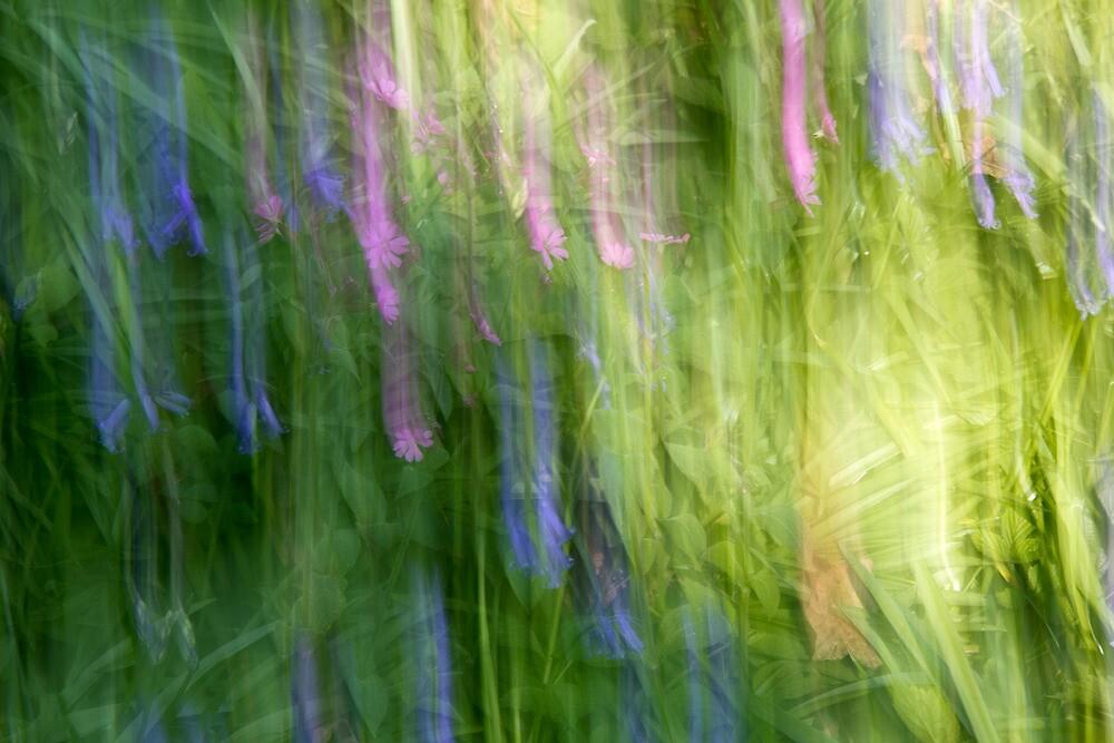 Floral Fantasy by BizziLizzy