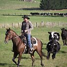 horseman being chased by cattle! by gaylene