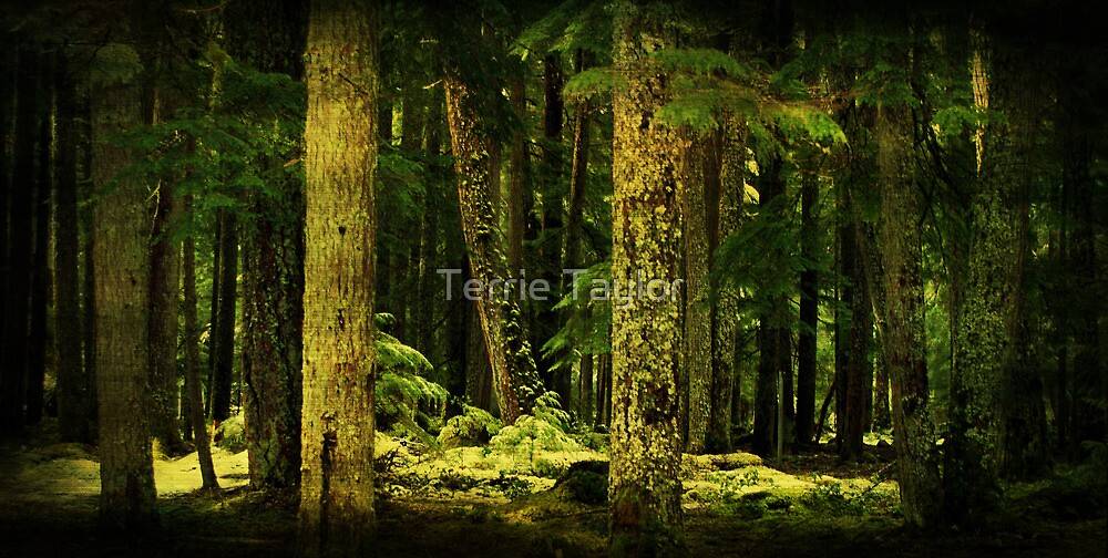 Where Fairy Tales Live by Terrie Taylor