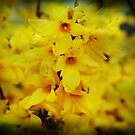 Forsythia - Textured by Terrie Taylor