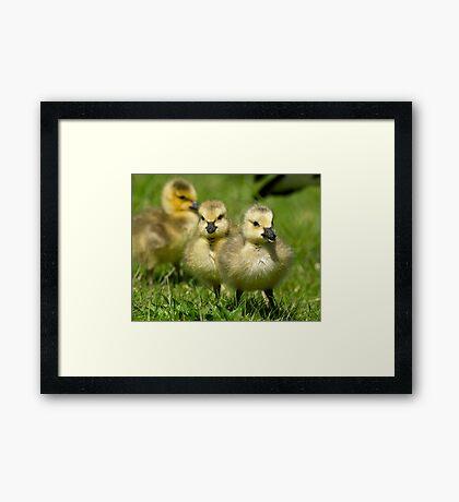 Sibling Revelry Framed Print