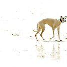 Dog on the beach by ulryka