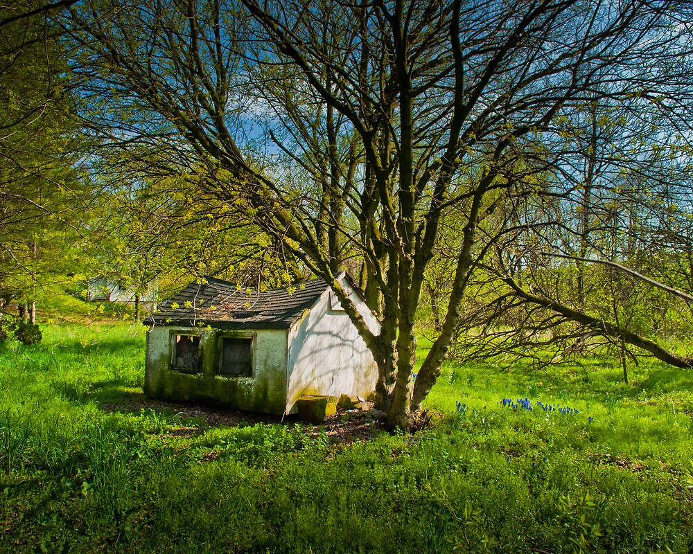 The Shed in the Trees by ericseyes