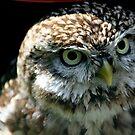 Little Owl by larry flewers