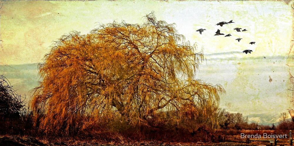 The Willow Tree by Brenda Boisvert