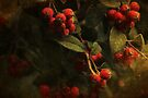 ~ Red Berries ~ by Lynda Heins