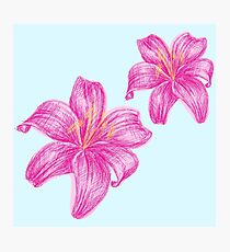pink lily flower Photographic Print