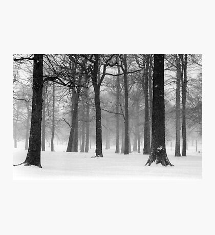 Snowy Day in Pelham Bay Park Photographic Print