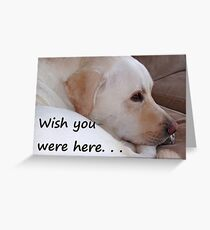 Greeting Card Wish You Were Here dog Greeting Card