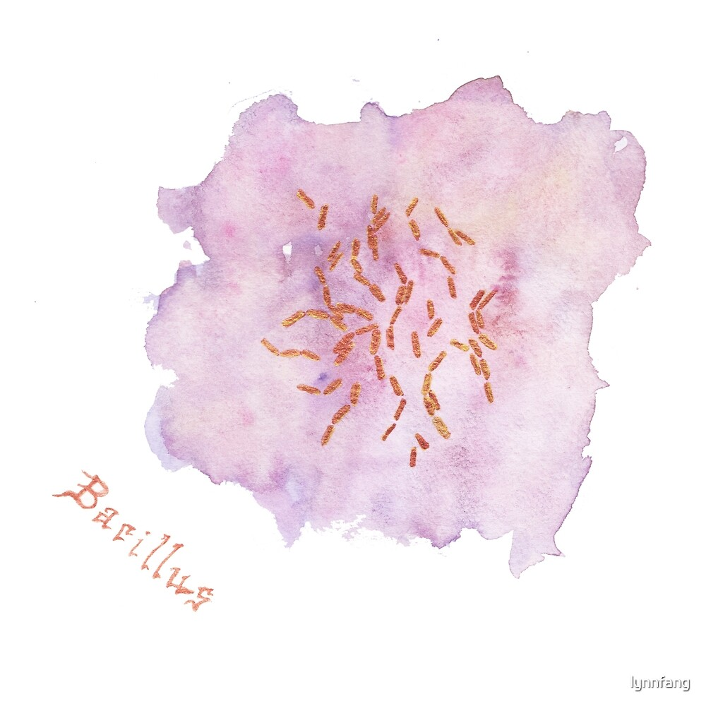 Bacillus Art Prints by lynnfang