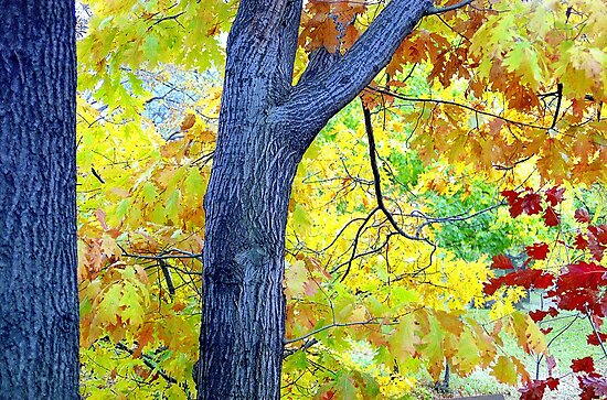 Autumn Leaves in Central Park  by Alberto  DeJesus