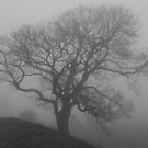 The Fog 2 by Mike Topley