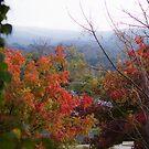 Yackandandah Autumn Series ~ From Railway Ave, Looking South by Jane Keats