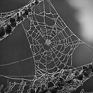 Spiders Web - Capturing the early morning dew by James Millward