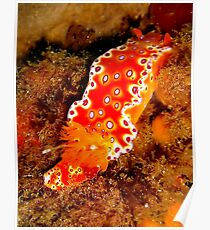 Bright Nudibranch Poster