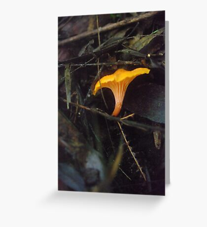 Australian Chanterelle Greeting Card