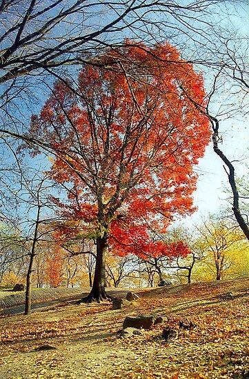 Red Autumn Tree by Alberto  DeJesus