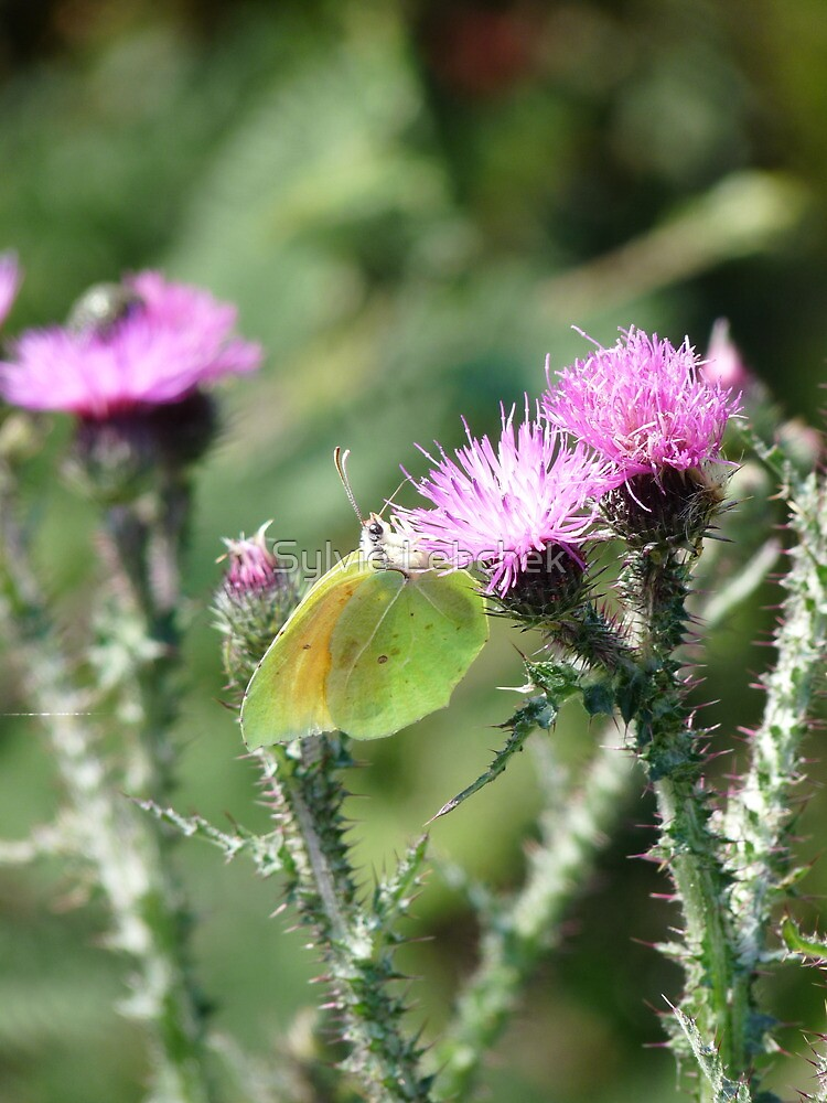 Yellow green Butterfly by Sylvie Lebchek