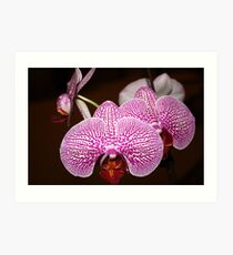 Little Orchids Art Print