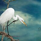 Evangeline Parish Egret by Bonnie T.  Barry