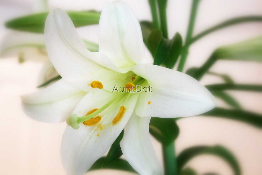 Easter Lily by AuntDot